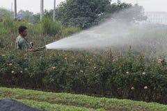 Hanoi, Vietnam - 21. Oktober 2015: Landwirtwasser die Anlagen zu seinem Feld auf Tageslicht Lizenzfreie Stockfotos
