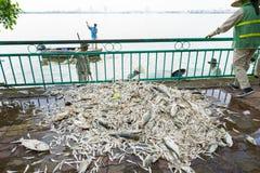 Hanoi, Vietnam - 2. Oktober 2016: Stapel von den toten Fischen, die auf dem Boden legen, sammelte vom verschmutzten Wasser bei We Lizenzfreies Stockfoto