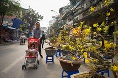 Hanoi, Vietname - 26 de janeiro de 2017: Os povos tomam uma decoração e uma flor de compra da caminhada pelo ano novo lunar vietn Foto de Stock