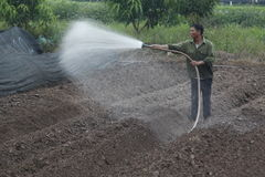 Hanoi Wietnam, Październik, - 21, 2015: rolnik woda rośliny jego pole na świetle dziennym Fotografia Stock