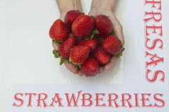 Hans with strawberries. Ripe and fresh strawberries Stock Image
