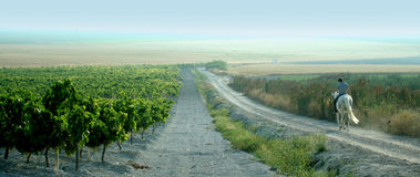 hans vingårdar för granskningar för hästryggryttarespanjor royaltyfri foto