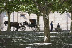 Hansom. ZAMORA, SPAIN - SEPTEMBER 8, 2009: The driver of a horse carriage talk to a colleague while wait customers on September 8, 2009, in Zamora, Spain royalty free stock image