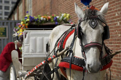 Hansom Cab. Getting ready for the day stock photography