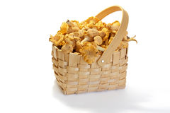 Сhanterelle mushrooms in the Basket  on a white. Background Stock Photo