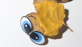 Hantverk från naturliga material, huvudet av larven av valnötskalet under det gula bladet för höst på en vit bakgrund arkivbilder
