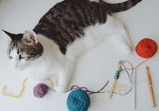 Hantverktabell med katten Royaltyfri Foto