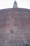 Grijze langurapen die op een kabel in oude stad Polonnaruwa, Sri Lanka beklimmen Royalty-vrije Stock Afbeeldingen