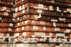 Hanuman langur, Semnopithecus entellus, monkey in Sacred City. Hanuman langur, Semnopithecus entellus, monkey from Sacred City, sitting on the wall of Royalty Free Stock Photos