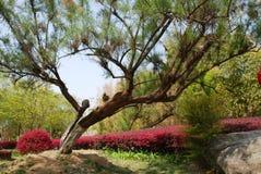Στριμμένο δέντρο λαιμών Στοκ φωτογραφίες με δικαίωμα ελεύθερης χρήσης