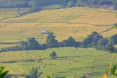 Hapao Rice Terraces. Mae Hong Son Province, Thailand stock photos