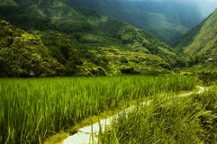 Hapao Rice Terraces, Philippin Royalty Free Stock Image