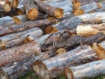 Haphazardly штабелированная куча деревянных журналов стоковое изображение