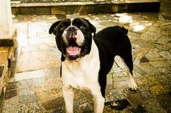 Hapi pies w parku zdjęcie stock
