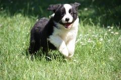 Funny puppy royalty free stock photo