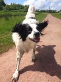 Happily crazy dog Stock Photo