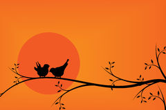 Happiness birds on tree branch during sunset Stock Image
