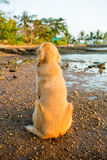 Happiness dog with sunset Royalty Free Stock Photo