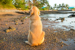 Happiness dog with sunset Stock Photos