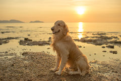 Happiness dog with sunset Stock Photo