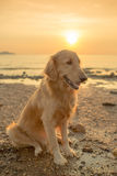 Happiness dog with sunset Stock Image