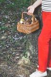 Happiness of mushroom picker. Basket with white porcini mushroom Stock Image