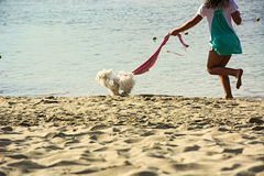 Happiness,pet,dog,girl,beach,sea. Racing on the beach of a girl and her dog Stock Photos