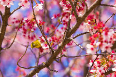 Happiness in Spring Royalty Free Stock Images