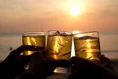 Friends concept, Bear party at the beach while sunset royalty free stock photo