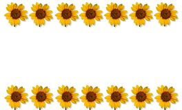 Happpy summer background with sunflowers Royalty Free Stock Image