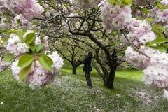 Happy. Botanical garden ,bronx,ny Royalty Free Stock Images
