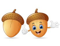 Happy acorn cartoon giving thumb up. Illustration of Happy acorn cartoon giving thumb up Stock Photography