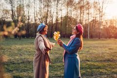 Adult daughter giving flowers as present to her senior mother in spring park. Mother`s day concept. Family values. Happy adult daughter giving flowers as present stock images