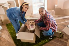 Happy african american couple with labrador dog in cardboard box moving to. New home royalty free stock images