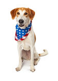 Happy American Patriotic Dog Sitting Royalty Free Stock Images