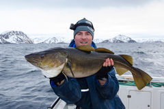 Happy angler with huge cod fish Royalty Free Stock Photo