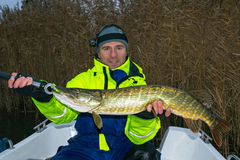Happy angler with huge pike trophy royalty free stock photos