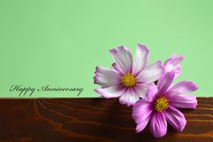 Happy Anniversary card with cosmos flowers. Happy Anniversary card with pink cosmos flowers vector illustration