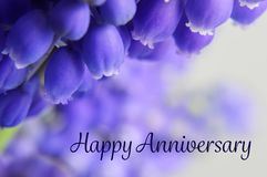 Happy Anniversary card with grape hyacinth royalty free stock photos