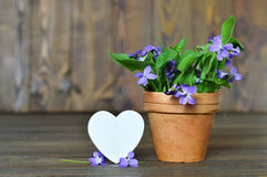 Happy Anniversary card with heart and violets. In clay pot Royalty Free Stock Photo