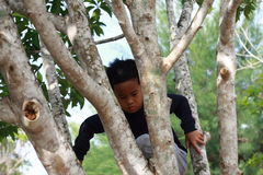 Happy Asian Boy Climbing Tree in the Park Stock Photos