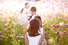 Happy asian children having fun to run and play together. In the cosmos flower field in summer time royalty free stock photo