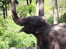 Happy Asian elephant Royalty Free Stock Photography
