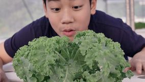 Happy asian little boy with a green salad for healthy nutrition, expressing happy  to eat vegetables stock video