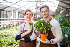 Happy attractive woman and man gardeners holding small mandarine tree Stock Image