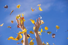 Happy autumn. Woman`s hands with yellow leaves Stock Photos