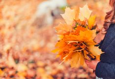 Happy autumn. A little girl in a red beret is playing with falling leaves and laughing. Girl in brown wool sweater and beret royalty free stock photo
