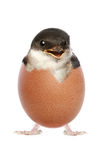 Happy baby bird hatched from egg Stock Image