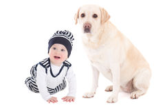 Happy baby boy and beautiful dog golden retriever sitting isolated on white. Background stock photography