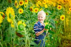 Happy baby boy blond sitting in a field with sunflowers in summer, children`s lifestyle